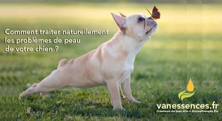 dermatite atopique chien traitement naturel